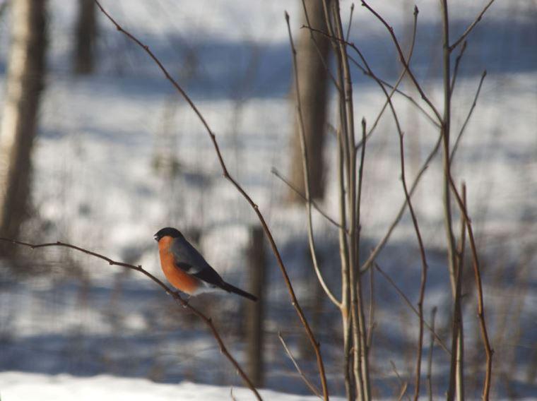 Petit oiseau dans un paysage d'hivert