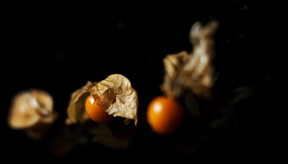 Physalys, un fruit riche en vitamine C (puissant antioxydant)