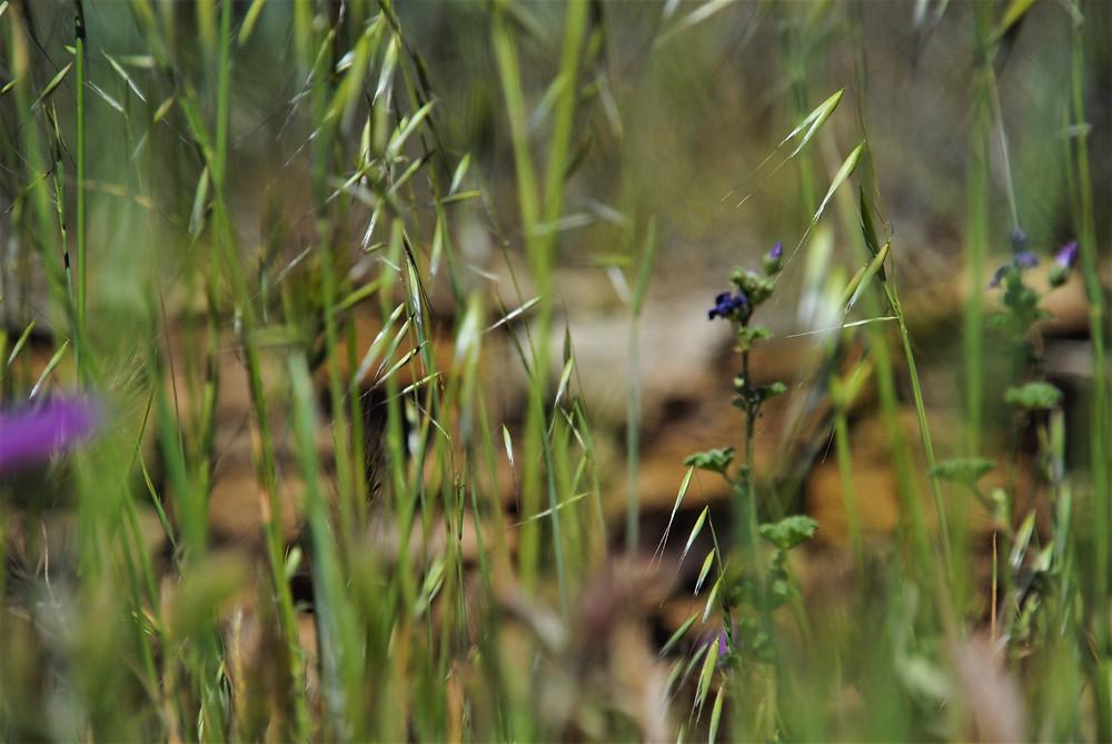 Photo de d'hautes herbes dans la campagne