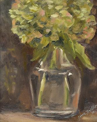 Hydrangea in Provence