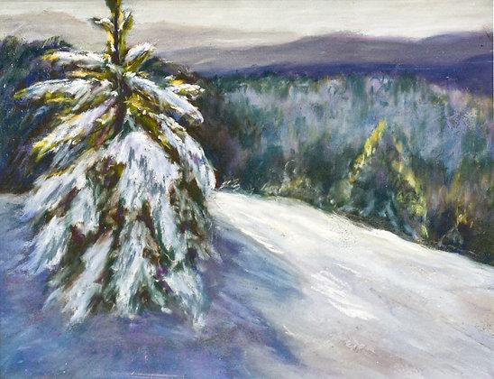 Evergreen on the Summit