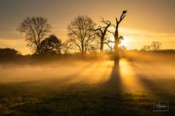 Svítání u pohanských dubů