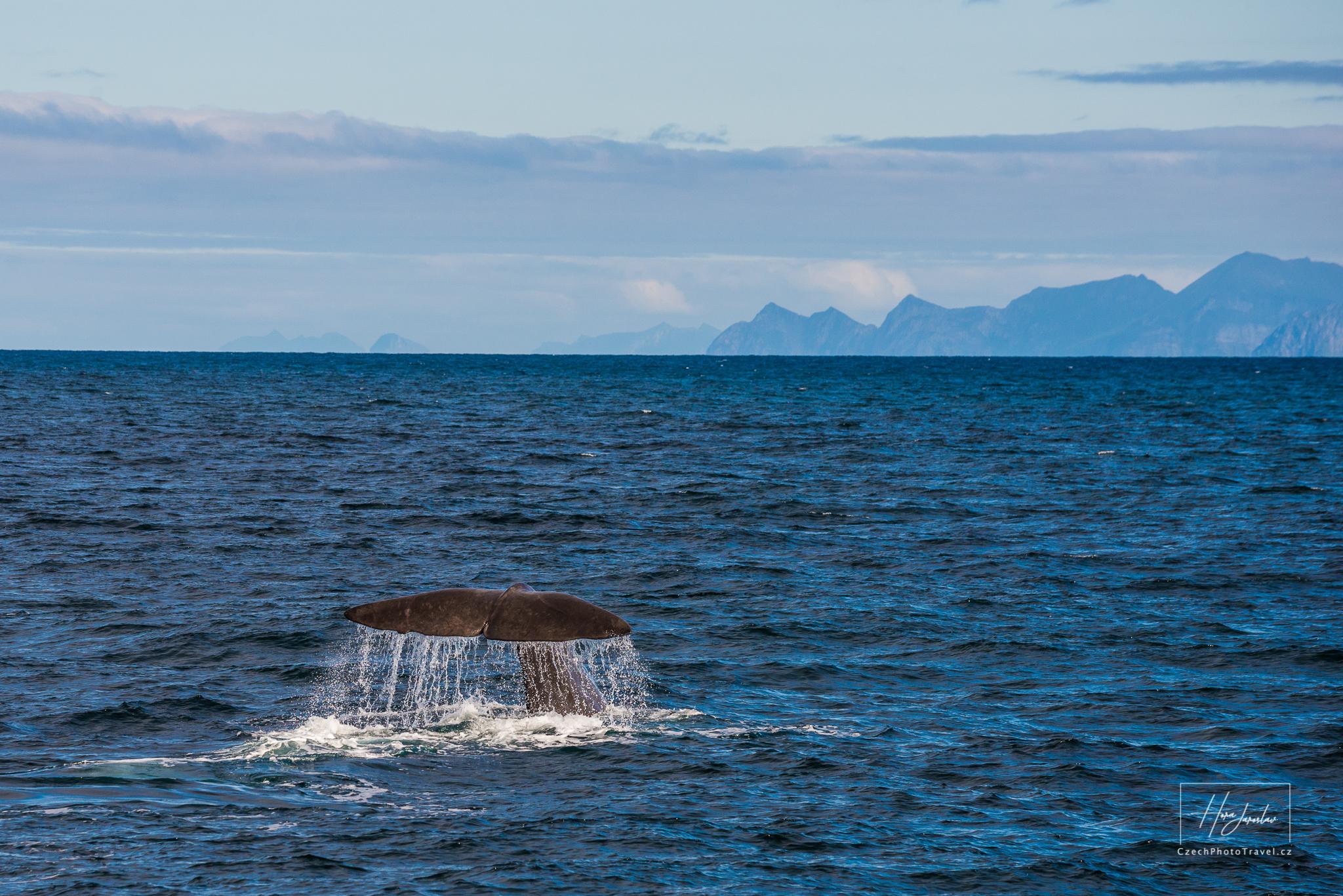 Velryby na Vesterálách