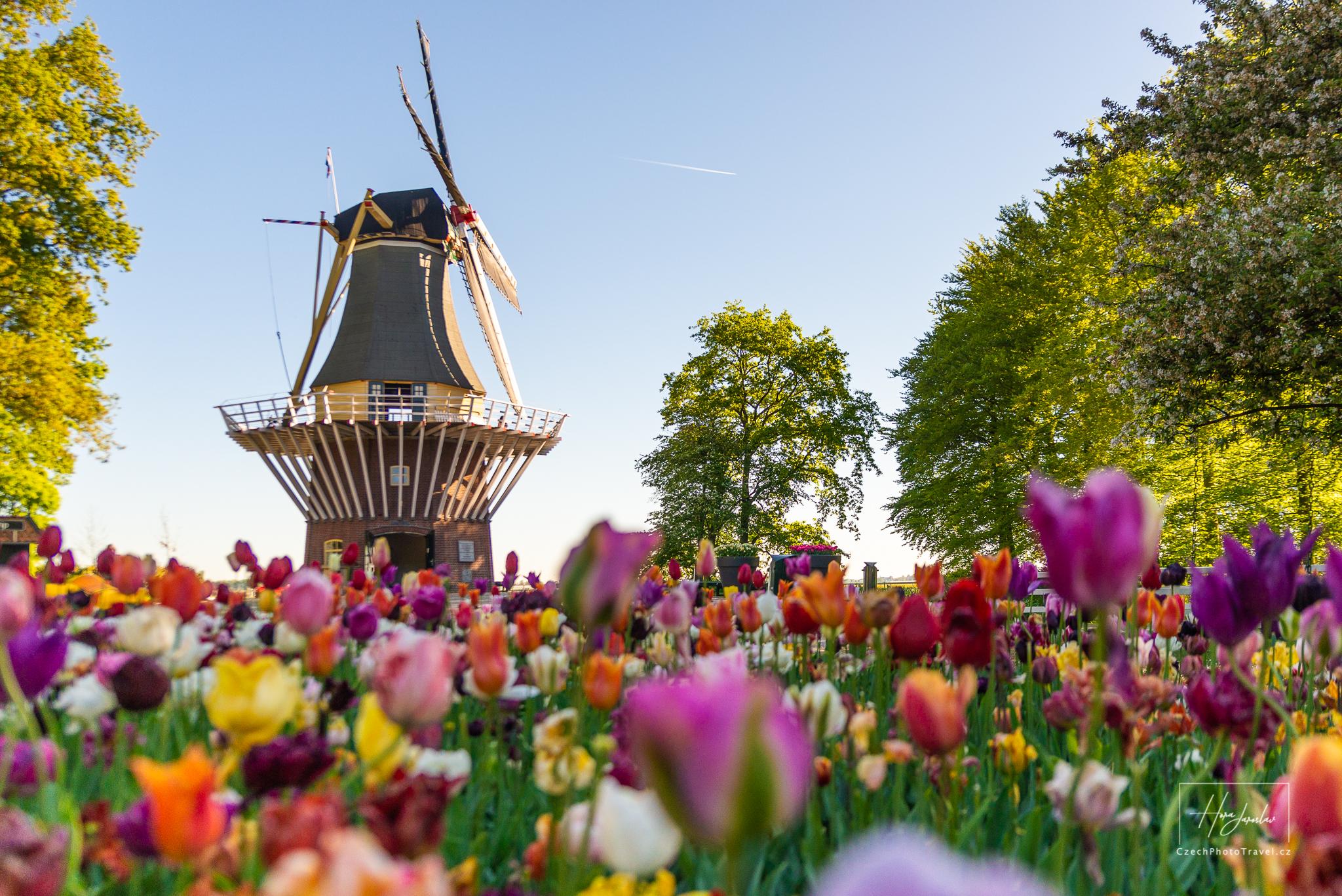 Fotoexpedice Holandsko - Keukenhof