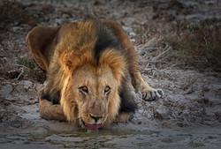 Fotoexpedice - zájezd Namíbie CPT_8236