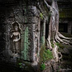 Kambodža Ta Prohm