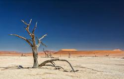 Fotoexpedice - zájezd Namíbie CPT_9499