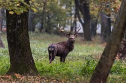 jeleni a mufloni v oboře