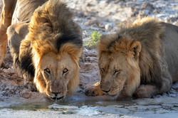 Fotoexpedice - zájezd Namíbie CPT_8303