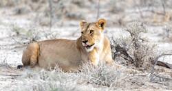 Fotoexpedice - zájezd Namíbie CPT_8113