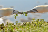 Terejové Helgoland fotoexpedice