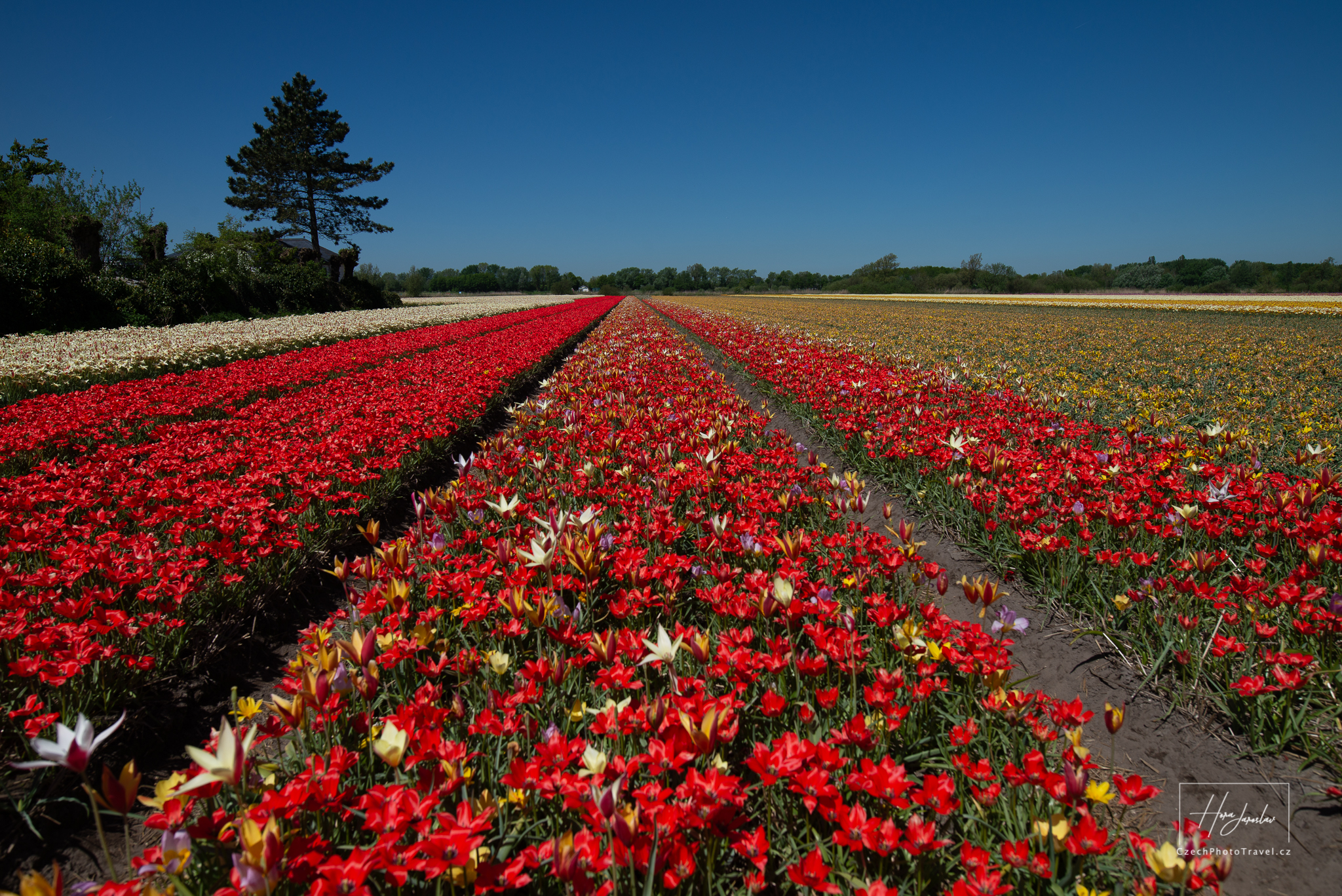 Fotoexpedice Holandsko - pole
