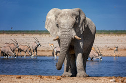 Fotoexpedice - zájezd Namíbie CPT_8478