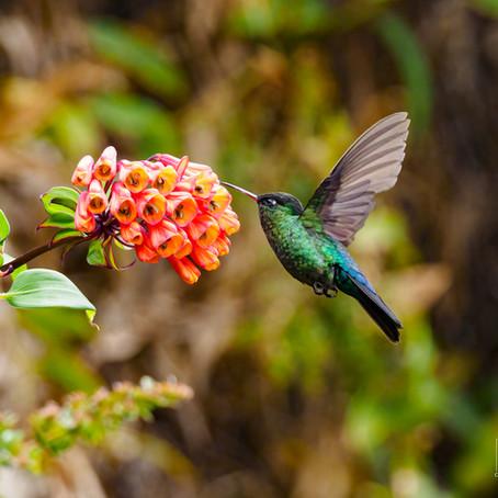 Kostarika - perla Střední Ameriky