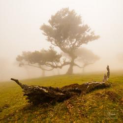 Madeira Fanal mlha
