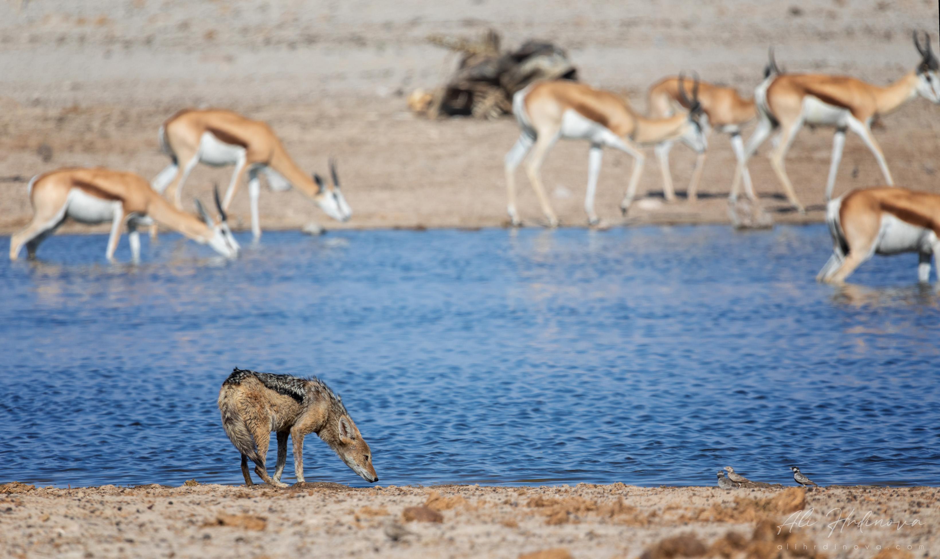 Fotoexpedice - zájezd Namíbie