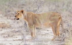 Fotoexpedice - zájezd Namíbie CPT_8086