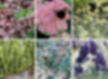 plantes-melliferes.jpg