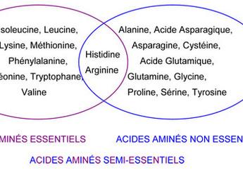 Les acides aminés et leur importance en matière d'anti-âge