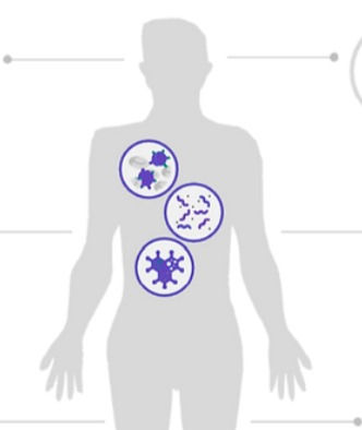Bilan du microbiote intestinal