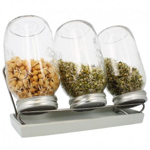 3 germoirs en verre avec acier inoxydable 1,5L