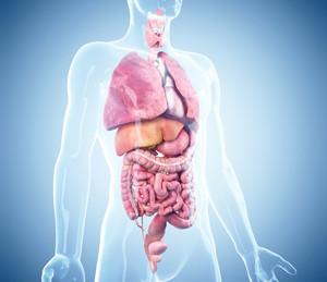 Nettoyage du tractus gastro intestinal, du foie et de la vésicule biliaire