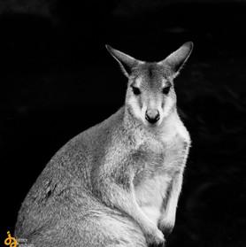Australia-0405-2.jpg