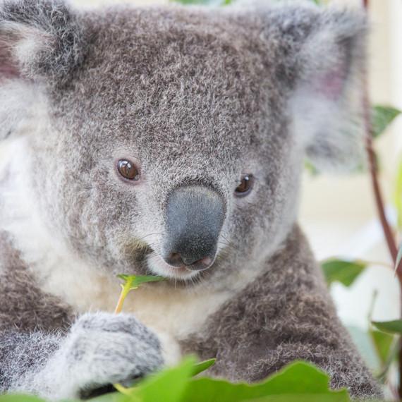 Australia-0536.jpg