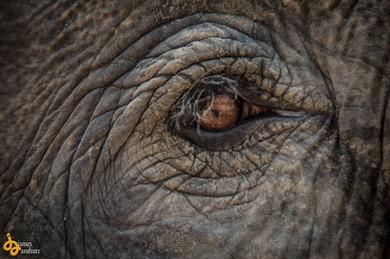 elephant-1219.jpg