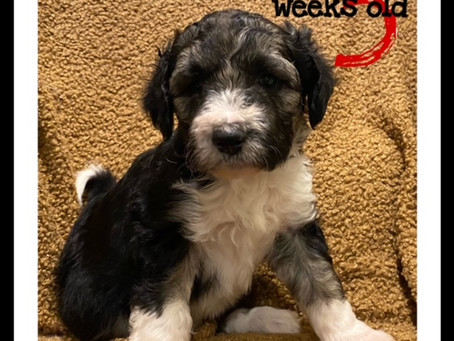 Finn! 5 Weeks and Growing!