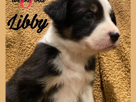 Libby! 5 Weeks and Counting!