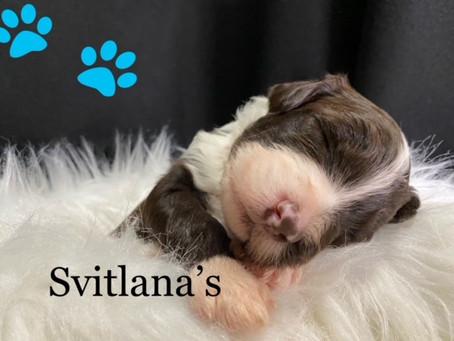 Svitlana's Puppy