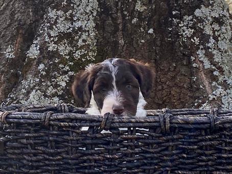 Jasper, is 6 Weeks Old!