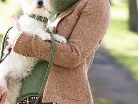 What Type Leash Should You Use?
