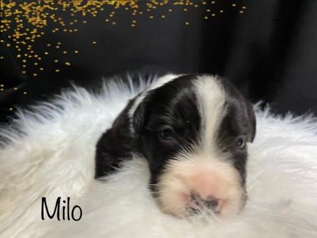 Milo!