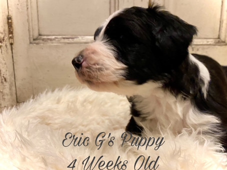 Eric G's Puppy Is 4 Weeks Old!