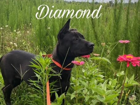 Introducing Julio and Diamond!