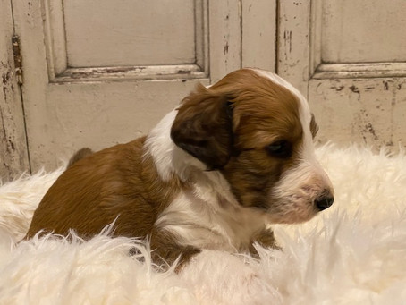 Here's Trigger!  He's 4 Weeks Old!!