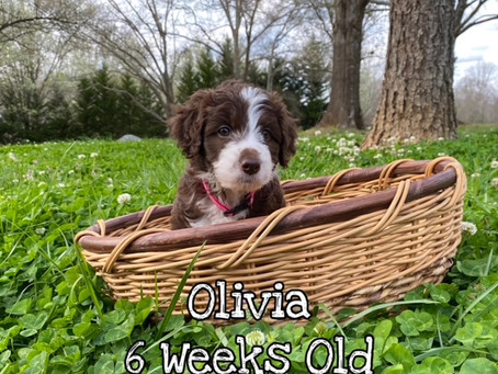 Olivia 6 Weeks Old