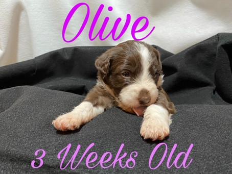 Olive is 3 Weeks Old!!