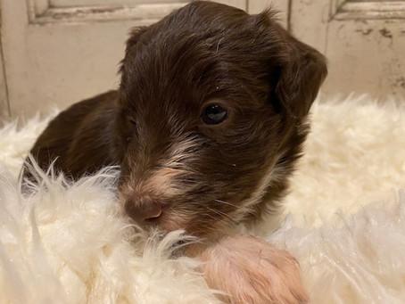 Scout! 4 Weeks Old!