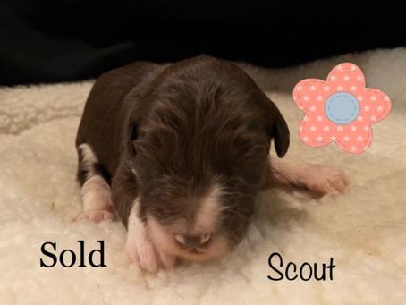 Scout is Homeward Bound!