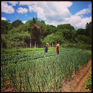 Gentle Giant Farm, CTGrown, Organic Farm, Connecticut