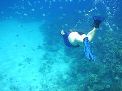 Plongé en Apnée, Roatan, Honduras