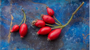 The benefits of roseship oil: a great plant-based ingredient to include in your white label range