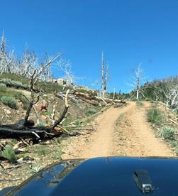 The Barney Riley Trail
