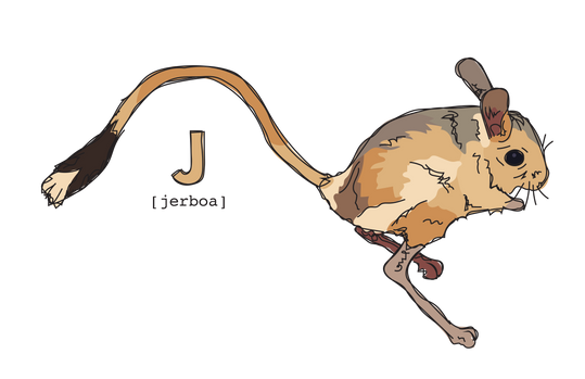 J is for Jerboa
