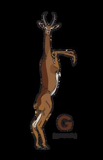 G is for Gerenuk