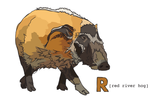 R is for Red River Hog