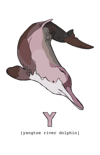 Y is for Yangtze River Dolphin